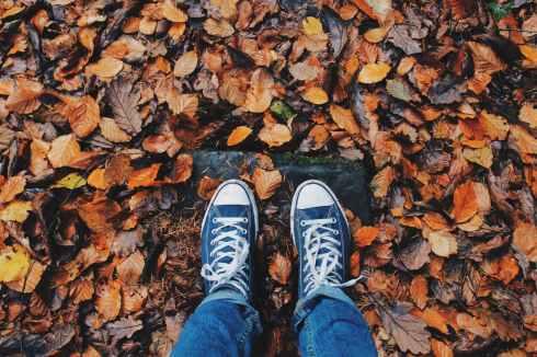 autumn close up color daylight